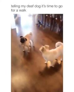 Animal Jokes, Funny Animal Memes, Funny Animal Videos, Funny Dogs, Cute Little Animals, Cute Funny Animals, Funny Cute, Cute Dogs And Puppies, Doggies