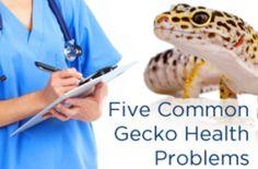 Gecko Health Problems                                                                                                                                                                                 More