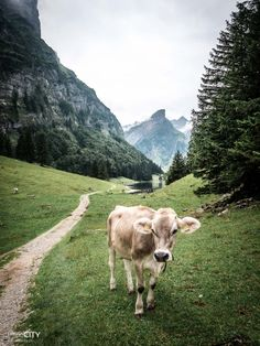 Seealpsee Appenzell Wanderung Reisen In Europa, Farm Yard, Oh The Places You'll Go, The Great Outdoors, Perfect Place, Amazing Photography, Switzerland, Hiking, Vacation