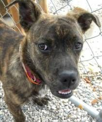 Little Whitfield has lived in two states in her mere 7 months of life! But she's sweet, friendly, playful...and looking for her forever family. How can you resist this face? If you can't, come visit her at Happily Ever After Animal Sanctuary in Northeast WI!