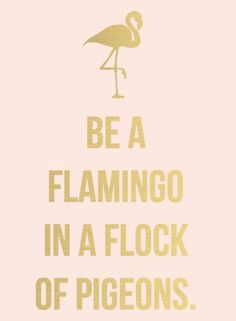 Be a flamingo in a flock of pigeons..