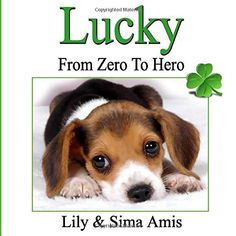 Lucky: From Zero to Hero von Lily Amis