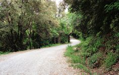 A little walk in the wood. //how to get fitter