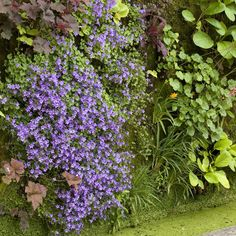 Growing Up: Vertical Gardening Tips  i want to know what the flowers are and how did they do it if you know pls post