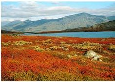 Ruska (period of autumn colours) in Lapland, Northern Finland. Beautiful Places, Beautiful Pictures, Felt Pictures, World Of Color, Norway, Tourism, Scenery, Nature, Autumn Colours