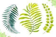 Watercolor tropical leaves set#2. by AlexGreenArt on @creativemarket