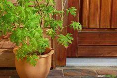 Die besten TIpps und Tricks, wie du deine Umgebung unwirtlich für Mücken machst. So nisten Sie gar nicht erst in deinem Garten, auf Balkon oder Terrasse