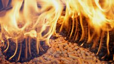 Senate Republicans Vote To Alter Physics, Saying Burning Trees Is Carbon Neutral! I'm a millionnaire. if just saying something magically makes it so, why didn't it just work for me? Kiln Dried Firewood, Smoke Grill, Pellet Stove, Carbon Neutral, Kiln Dry, Wood Pellets, Smoked Ribs, Carbon Footprint, Go Green