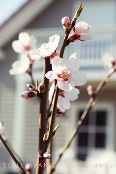 BELLE BLANC: Spring Fresh