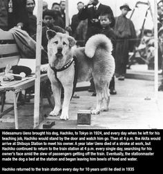 The story of Hatchiko.