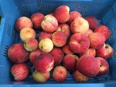 Apple, Fruit, Food, Potato, Apple Fruit, Essen, Meals, Yemek, Apples