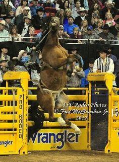Saddle Bronc Riding - National Finals Rodeo - Las Vegas, Nevada.