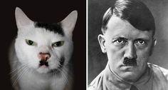 #cats who #look like #hitler :S http://www.cribeo.com/estilo_de_vida/5921/17-gatos-que-guardan-un-parecido-mas-que-razonable-a-personas-y-cosas