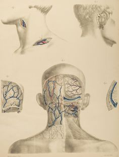 From the anatomical literature and drawings collection at Heidelberg University--HeidICON.