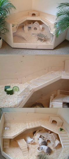 Corner guinea pig house (trying to make this for hamsters) Diy Guinea Pig Cage, Guinea Pig Hutch, Guinea Pig House, Pet Guinea Pigs, Guinea Pig Care, Hamster Diy Cage, Cages For Guinea Pigs, Hamster Diys, Guinea Pig Food
