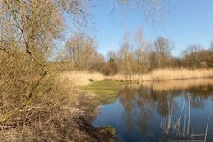 "Meteorry posted a photo:  Sloterpark ""Het Ruige Riet"" 10/03/2017 11h30  In my childhood this part of the Sloterpark was named Vogeleiland (Bird Islan ) but nowadays this part is called Het Ruige Riet , translated in English The Rough Reeds . Found this location on the middle of the island and tried to do a kind of jump pose this time. This history of this park dates back to the 1950's when this part was left to the nature after the increment of the land next to the lake Sloterplas . This…"