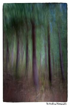 The Ambling Photographer: Black Birch Forest