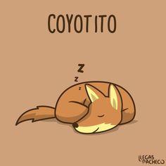 Literalmente, y gráficamente, un Coyotito. #HumorAldoConti #Humor #Risa…