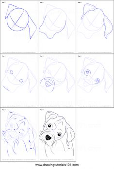 Puppy Drawing Easy, Dog Drawing Tutorial, White Boxer Puppies, Boxer Dogs, Boxer Dog Tattoo, Zentangle, Drawing Sheet, Easy Animals, Dog Wallpaper