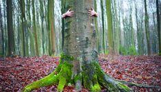 Sustainability, Deep Ecology, & the Sacred | Spiritual Ecology