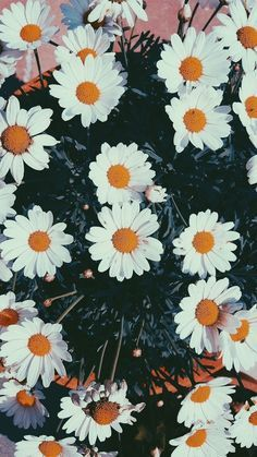 39 Ideas Flowers Photography Wallpaper Phone Wallpapers Daisies For 2019 Tumblr Wallpaper, Screen Wallpaper, Cool Wallpaper, Flower Backgrounds, Wallpaper Backgrounds, Iphone Backgrounds, Aesthetic Iphone Wallpaper, Aesthetic Wallpapers, Iphone Photography