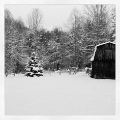 My post card view of our backyard. #hokeholler