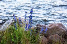 Åkte från Göteborg till Arboga. En resa som tog nästan 5 timmar. Stannade till vid Hjämaren. #jonas_fotograf #natur #visitsweden #arboga #sweden #ig_captures #ig_masterpiece #ig_great_pics #ig_today #ig_nature #ignature #sverige #visitsweden #visitarboga #landscape #love_nature #love_landscape #landscape_lover