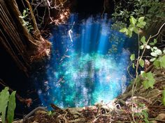 Beautiful clear natural well, Yucatán