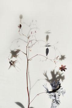 Anne Ten Donkelaar - http://anneten.nl/works/13-bloemcollages  via Design for Manking