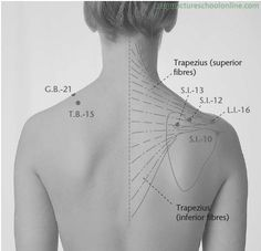 S.I.-13 Crooked Wall QUYUAN - Acupuncture Points -3