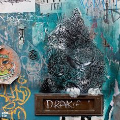 Cats by C215