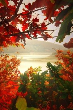 Autumn view...