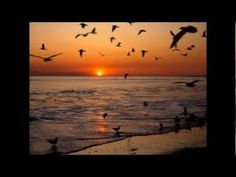 The Virginia and North Carolina beaches-all the seagulls! Beach Wallpaper, Scenery Wallpaper, Cool Pictures, Cool Photos, Amazing Photos, Nc Beaches, North Carolina Beaches, Free Beach, Most Beautiful Cities