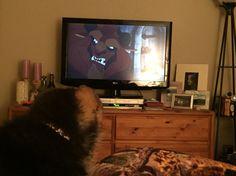 Beast watching the Beast