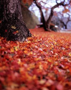 The leaves have fallen in all their brilliant colors.