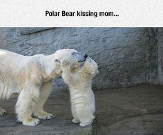 Polar Bears Are Adorable