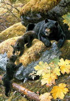 """Carl Brenders - """"Nosing Around"""" (He is my favorite wildlife artist!)"""