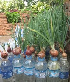 27 Wondrous Intelligent and Low-cost Indoor Garden Ideas Some fountains use solar power for the pump which enables you to dispense with the power lead, but the pump will only operate while the sun is shining. Ideally an array of people from various Veg Garden, Vegetable Garden Design, Fruit Garden, Edible Garden, Garden Plants, Garden Farm, Dish Garden, Green Garden, Vegetable Gardening