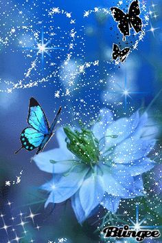 ❤️Butterfly GIF'S