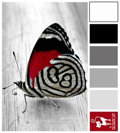 Butterfly - Black, White, Grey, Slate, Ash, Berry, Red - Designcat Colour Inspiration Board