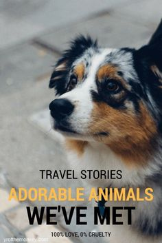 This post is about all our animal encounters during our travels in USA and abroad (Turkey). No zoos or cruel amusement parks, this is about making friends with farm animals and domestic pets, i.e. adorable cats and dogs at our Airbnbs, B&Bs and other inns where we stayed or shops were we stopped by! A fun read for all animal lovers and pet parents