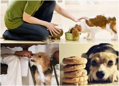 How to properly and thus feed a dog to be healthy