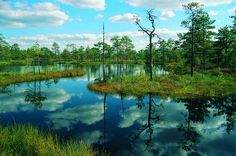 Lahemaa National Park Estonia   Enthralling Estonia Travel