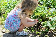 Creating summer memories with fun traditions. Strawberry picking with Freshly Picked.
