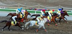 Omani jockeys compete during the annual Royal Horse Racing Festival in Muscat. The festival's shows were presented by male and female riders of the Royal Cavalry and Royal Household Troops, the Royal Guard of Oman (RGO) and school students.