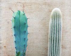 Cactus + Succulent // Indoor + Outdoor // Garden Ideas + Inspiration