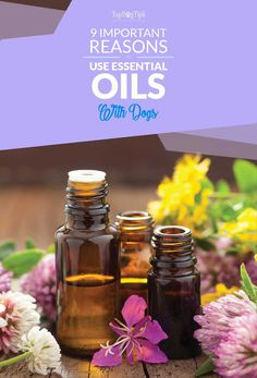 Reasons to Use Essential Oils for Dogs. I first learned about essential oils a few years ago. I was a new mother and din't want to use chemical filled bug sprays, medications or other treatments on my son. After consulting with our pediatrician, I decided