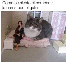 Compartir la cama con el gato