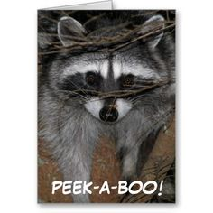 >>>Low Price          Raccoon Birthday Wishes Greeting Card           Raccoon Birthday Wishes Greeting Card This site is will advise you where to buyShopping          Raccoon Birthday Wishes Greeting Card today easy to Shops & Purchase Online - transferred directly secure and trusted checko...Cleck See More >>> http://www.zazzle.com/raccoon_birthday_wishes_greeting_card-137207039009903825?rf=238627982471231924&zbar=1&tc=terrest