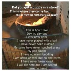 Do Not buy a puppy from a store.